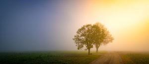 2 Bäume im Nebel