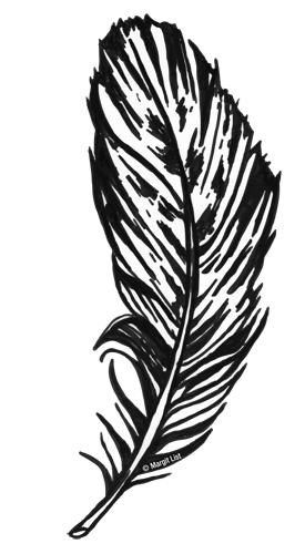 Feder Zeichnung